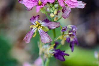 Native Plants of the Santa Monica Mountains