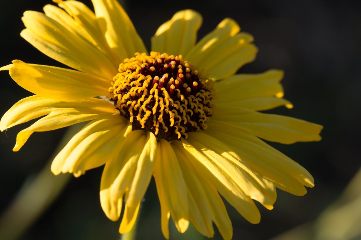 Garden Bush: Plant Of The Month