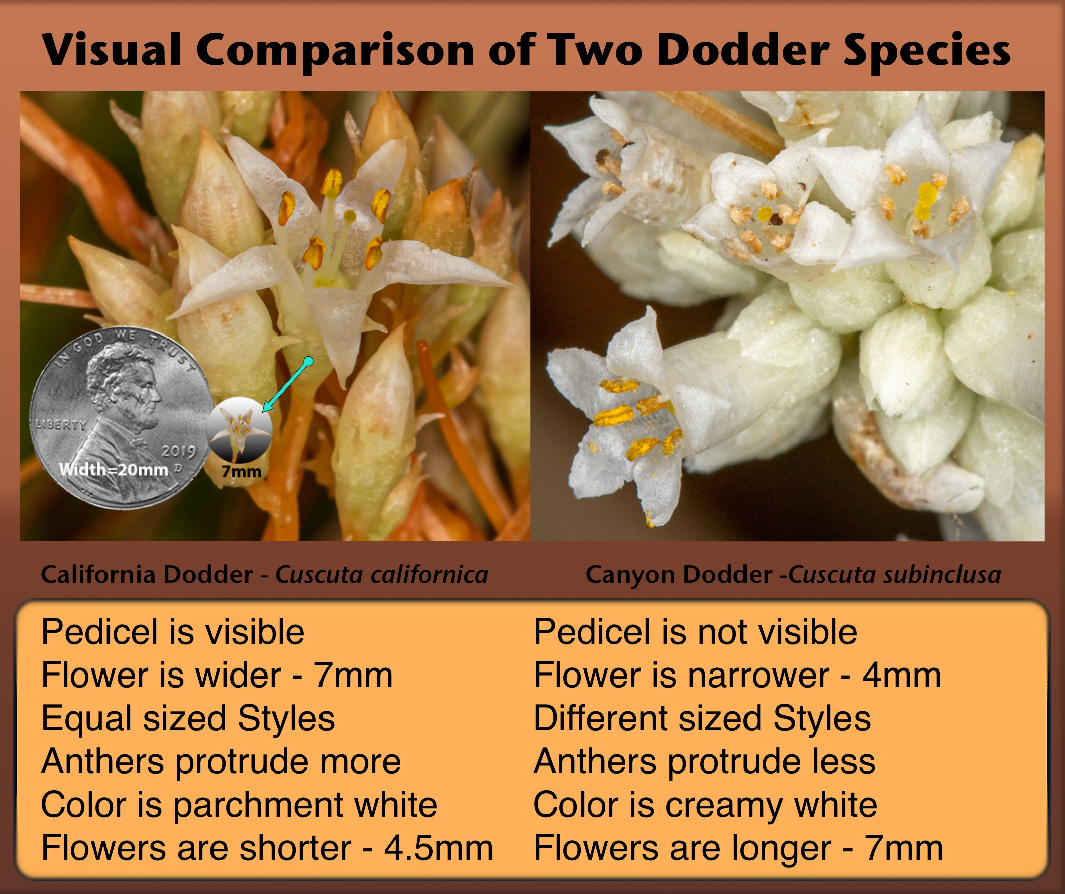 Comparison of Flowers